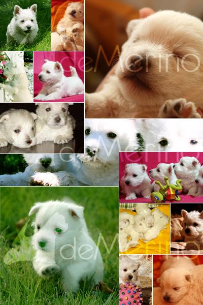 Cachorros Demerino