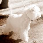 Katana Demerino en exposición canina