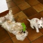 Lola y Yeyé jugando en el suelo