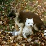 La pastora alemana protegiendo a la manada