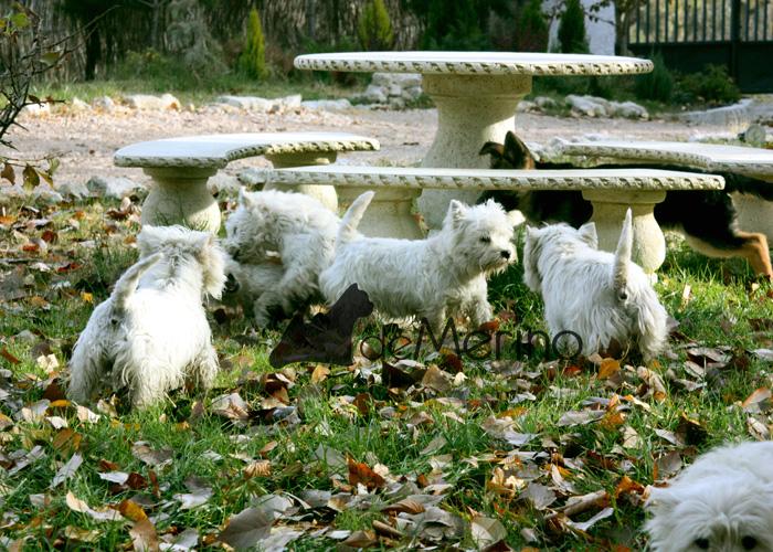 La pastora alemana conociendo a la manada