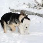 Fan y Yeyé del Goyepino jugando en la nieve