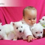 Nuestra hija interactuando con cachorritos Demerino