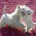 Fantasía Demerino jugando con su cachorra