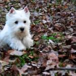 Cachorros de Construyendo Mi Futuro Demerino y Alborada Rock Star, con 3 meses