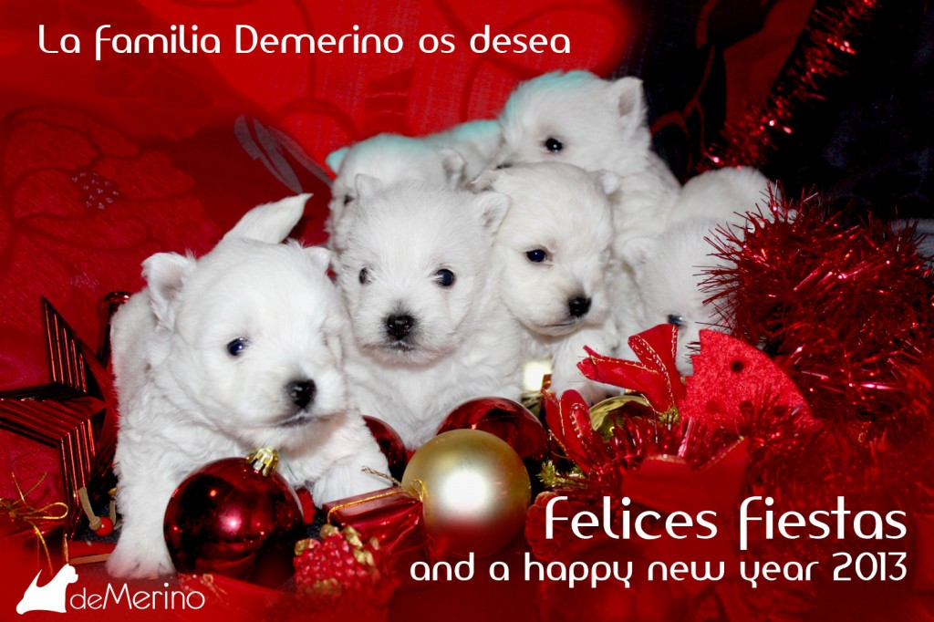 Los cachirros Demerino y familia os desean Felices fiestas and a happy new year 2013
