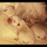 Camada de katana descansando horas después del parto