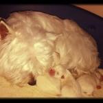 Katana con sus cachorros descansando horas después del parto