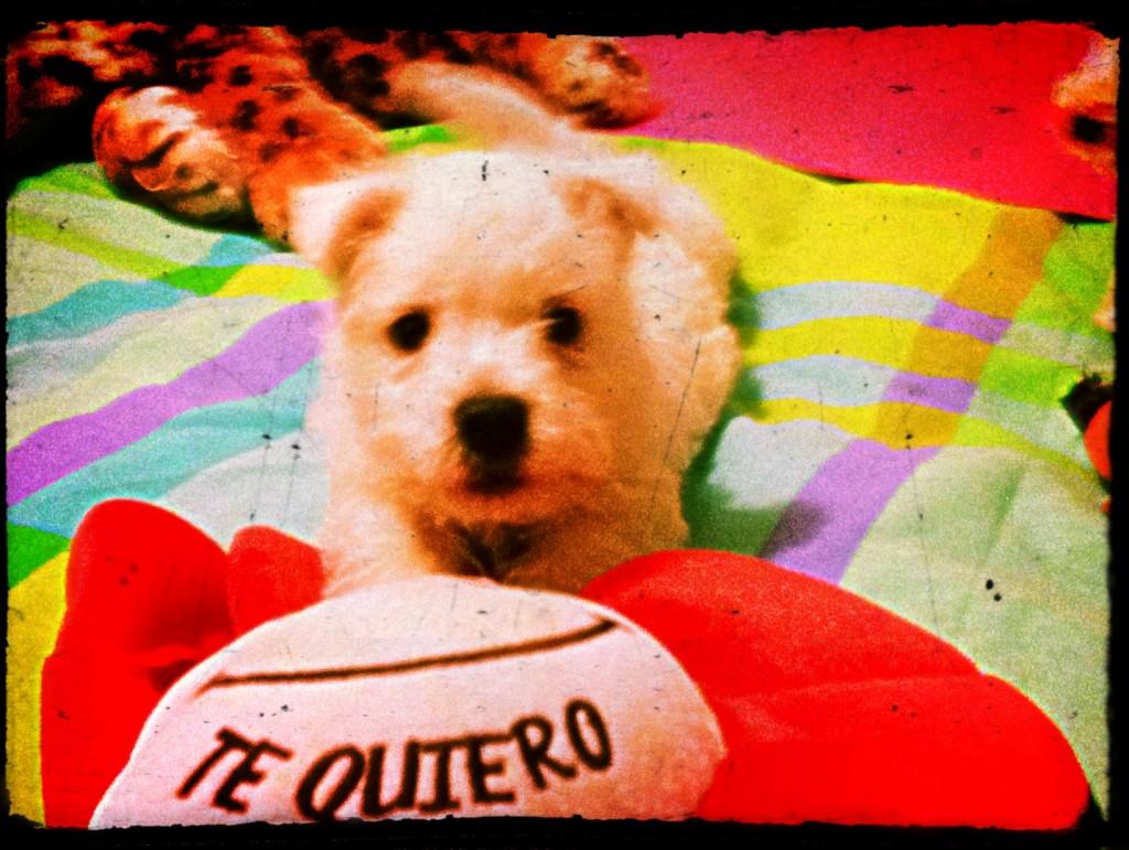 Cachorro de west highland white terrier, hijo de Katana Demerino, posando con una flor