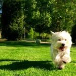 Imagine Demerino jugando feliz en el parque