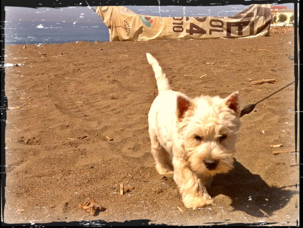 Thor, Tortitas Con Nata Demerino, dando un paseo matutino por la playa