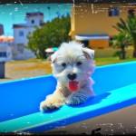 Uma Ryu Demerino, posando en una barca en la playa.