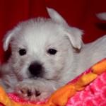 20130908-cachorros-kaka-be-a-star-001 jugando con los peluches