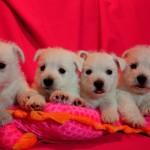 20130908-cachorros-kaka-be-a-star-002 camada