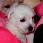 20130908-cachorros-kaka-be-a-star-003 jugando con los peluches