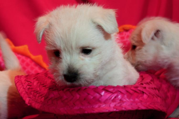 20130908-cachorros-kaka-be-a-star-004. Jugando con un somberro rosa