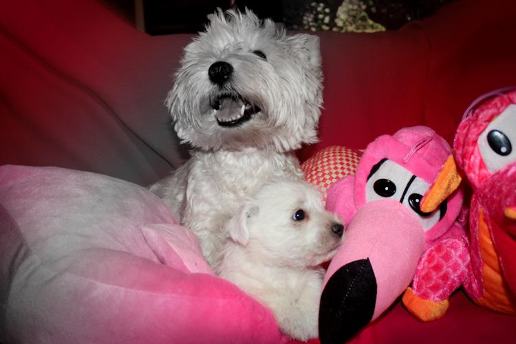 Kabba con sus cachorros en el sofá de casa