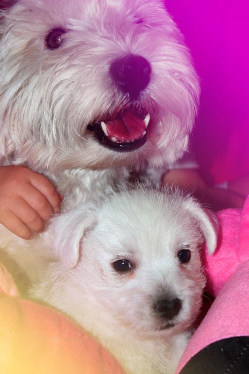 Kabba con sus cachorros y con peluches