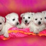 20130908-cachorros-kaka-be-a-star-009b - camada completa