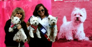 Westies en el photocall