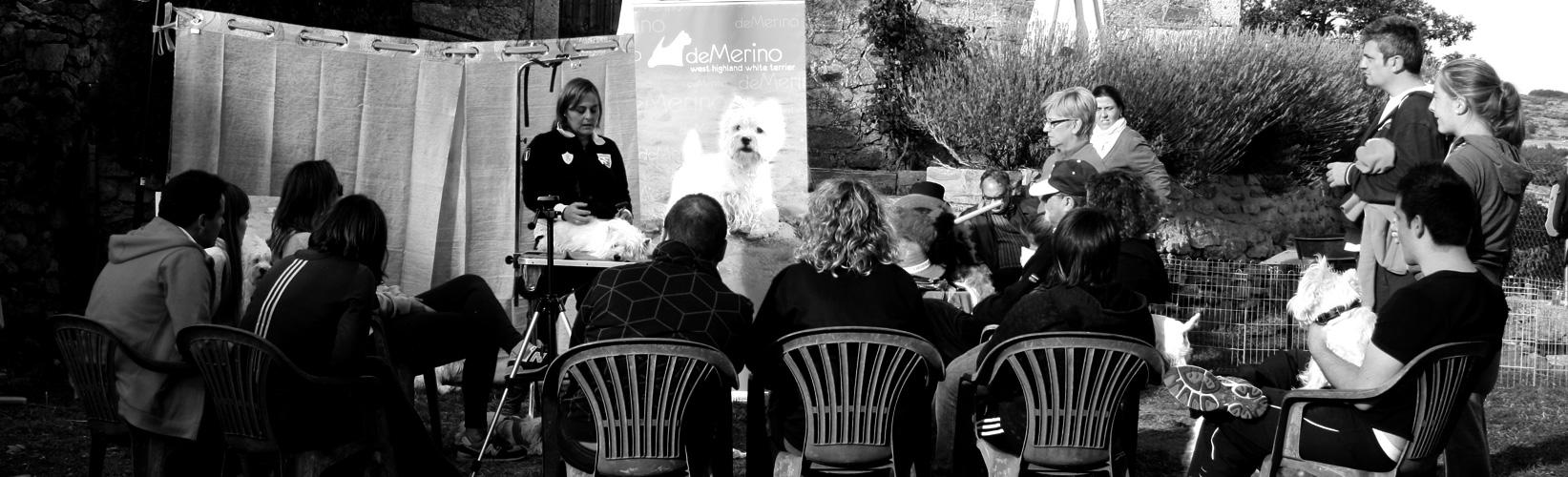 Encuentro Westies Demerino. Taller de peluquería canina (blanco y negro)
