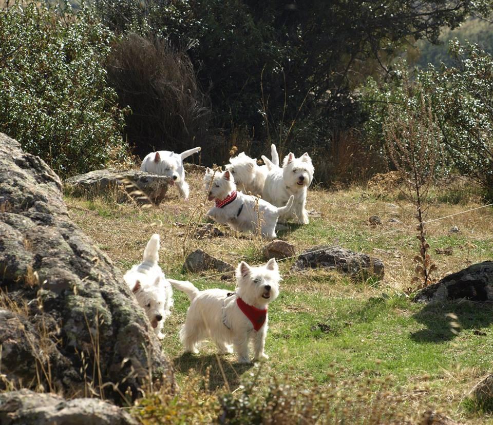 Encuentro Demerino. Fotos de los participantes, paseo por el campo