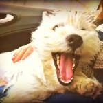 Vhella Demerino en el regazo en el coche