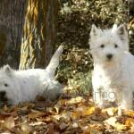 A la derecha Yeye y a la izquierda Kabba jugando en el jardín en otoño.