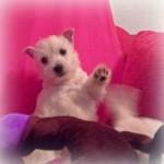 Cachorras de Imagine Demerino y Pequeño Saltamontes Demerino, jugando en el sofá