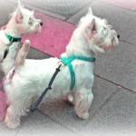 Vhella Demerino en un paseo por la calle