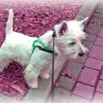 Vehlla Demerino en un paseo por la calle