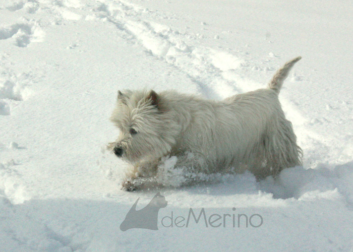 Lola en la nieve