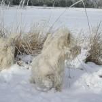 Yeye y Yari en la nieve