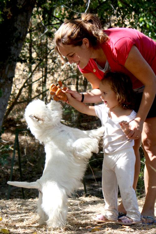 Pequeño Saltamontes Demerino jugando en el jardín con nuestra hija