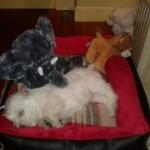 Xena Demerino durmiendo en su cunaa los pocos días de llegar a su casa, en Madrid