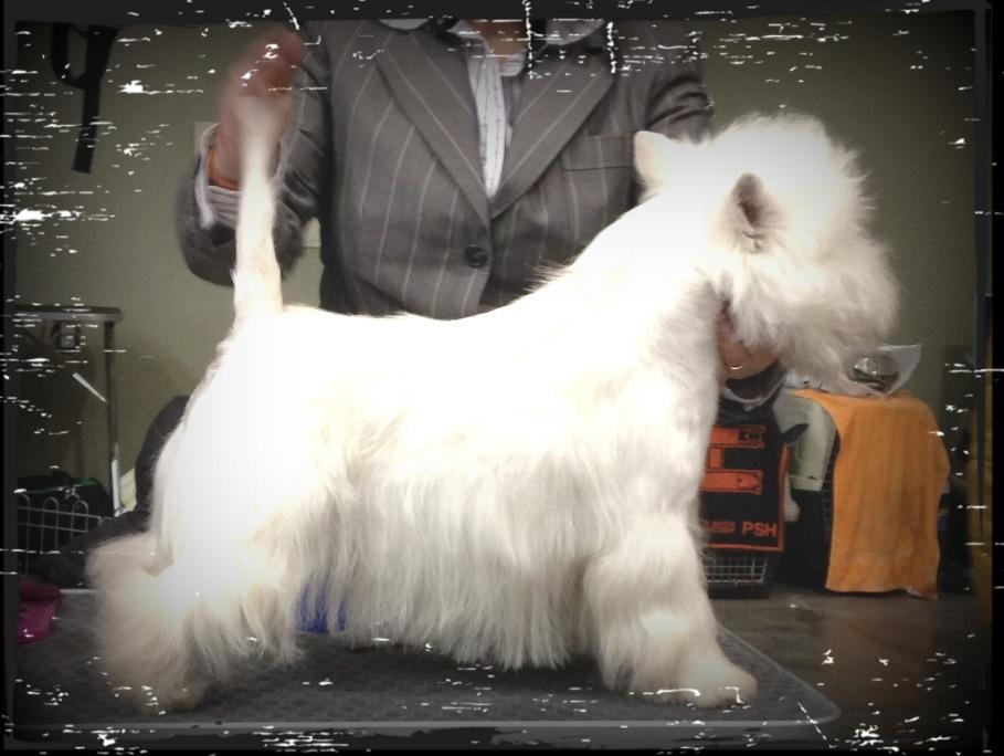 Only You Demerino, en la XXXIV Exposicion Nacional Canina de Valladolid 2014