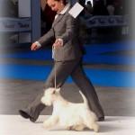 Only You Demerino en la XXXI Exposición Internacional Canina de Valladolid 2014