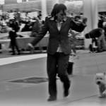 Only You Demerino compitiendo por el mejor westie de clase intermedia en la XXXIV Exposición Nacional canina de Valladolid 2014