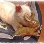Xandía Demerino mordiendo un conejo de peluche