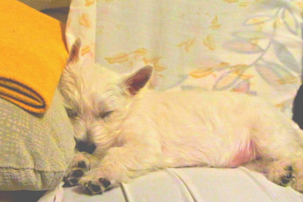 Xhante Demerino (Karim), durmiendo en el sofa - Valladolid
