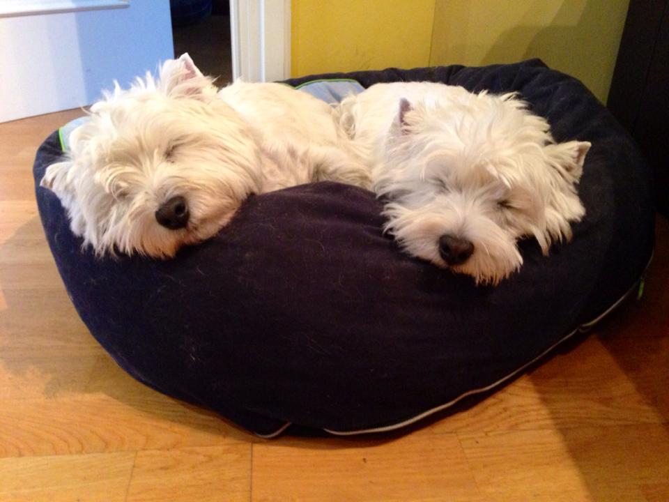 Kopelia Demerino y Katana Demerino durmiendo en la cuna, en Valladolid