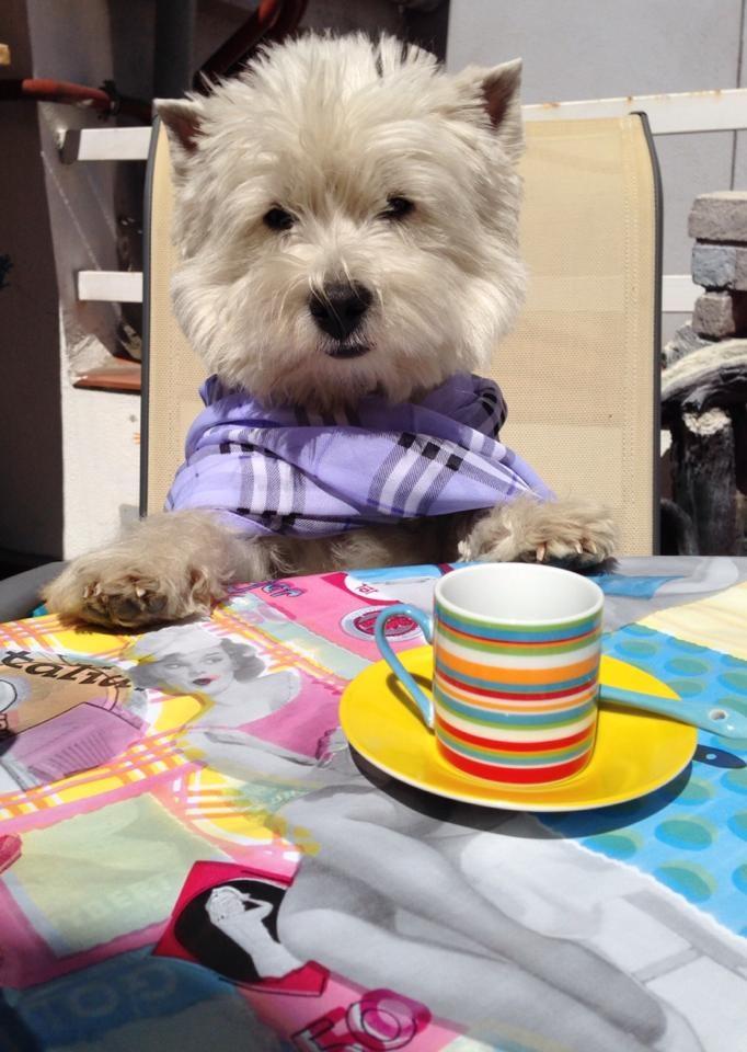 Fanta - Reyeyita Demerino - tomando un café sentada a la mesa - Valladolid