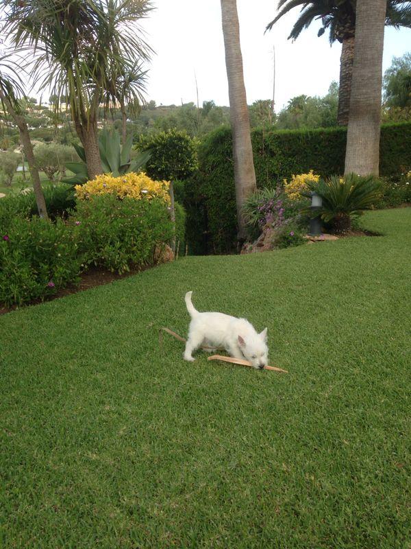 Bobby - Zippi Demerino en su jardín de Marbella jugando con una hoja