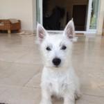 Bobby - Zippi Demerino en su jardín de Marbella