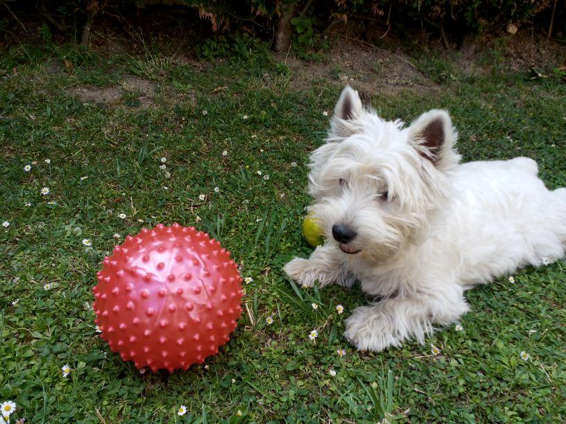 Xena Demerino jugando con una pelota en el jardín (Madrid)