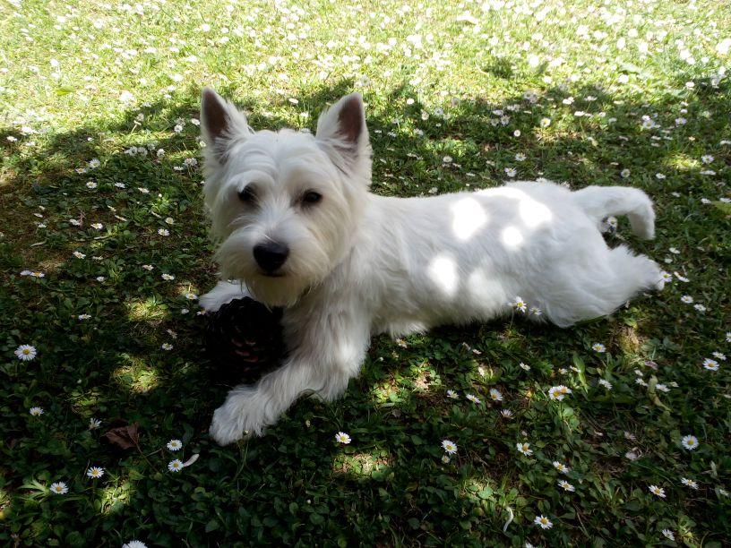 Xena Demerino descansando en el jardín (Madrid)
