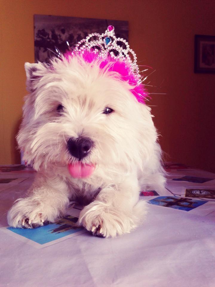 Reyeyita Demerino (Fanta) siendo coronada de rosa en su casa, sacando la lengua