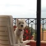 Whisky - Willy Fog Demerino, en Marbella en su terraza