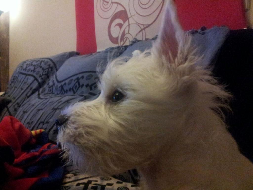 Noa - Agua Viva Demerino viendo la televisión