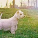 Vera atenta en el parque